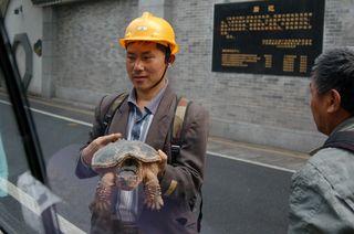 Gz_temple_turtle