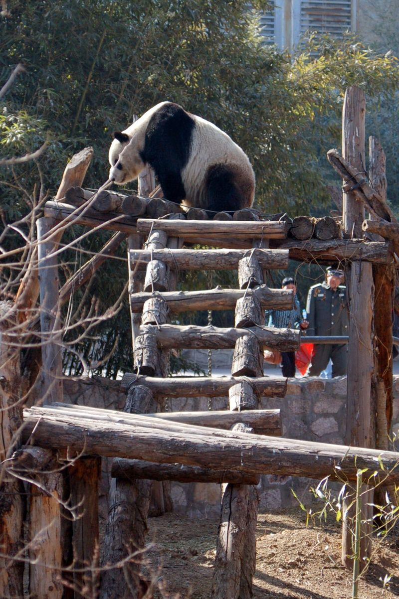 Beijing_zoo4