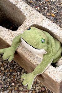 Itchyfrog